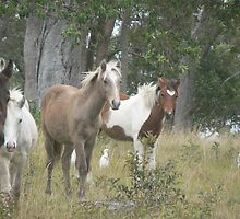 Young Fillies, Red Rock by louisegreen