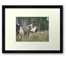 Young Fillies, Red Rock Framed Print