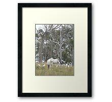Wild Ponies & White Birds, Red Rock Framed Print