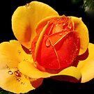 Autumn's Insistence  by Chuck Gardner