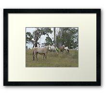 Wild Ponies & White Egrets, Red Rock Framed Print