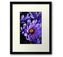 Pastel Purple Daisy Framed Print