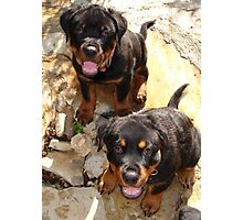 Clyde and Fluff (Rottweiler Puppies) Photographic Print