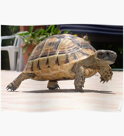 Marching Baby Tortoise  Poster