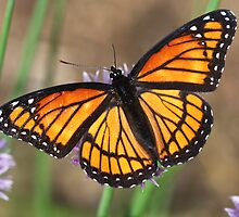 Beauty With Wings by Deborah  Benoit