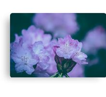 Dream Flower 5 Canvas Print