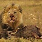 Gaze of a King by Yolande van der Merwe