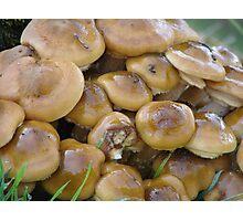 Autumnal Fungi Photographic Print