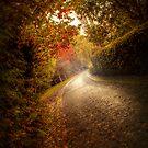 Autumn Road by Matthew-T-Nixon