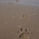 doggie was here by Adriana Wasyk