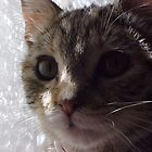 Pretty Kitty by Leslie  Lippert