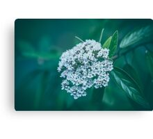 Dream Flower 9 Canvas Print