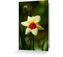 Backlit Narcissus Greeting Card