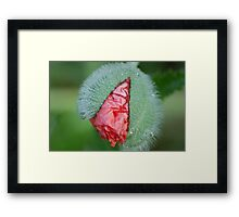 New baby is born Framed Print