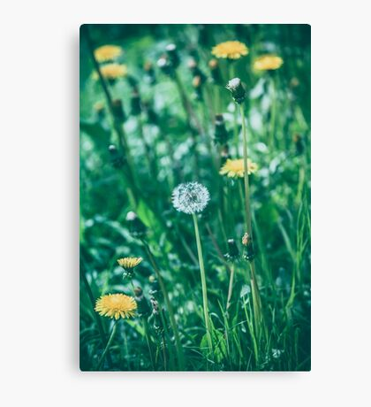 Dream Flower 10 Canvas Print