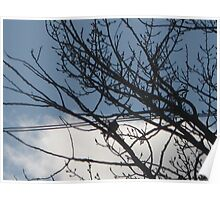 Mourning Dove - Silhouette Poster