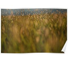 Burning Grasses Poster