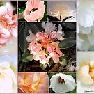Softness - Collage Of Garden Flowers. (308) by naturelover