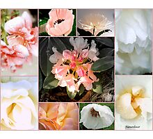 Softness - Collage Of Garden Flowers. (308) Photographic Print