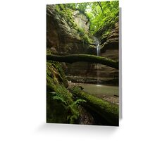 Moss, Ferns, and Water Greeting Card