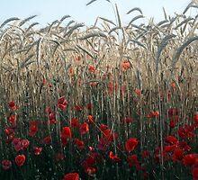 The field by Christian  Zammit