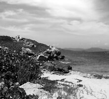 Haiti Near Dragon by Rebecca Luering