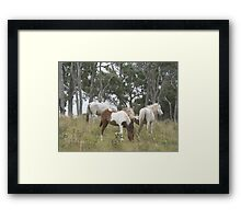 Wild Pony Mares & Foals Framed Print