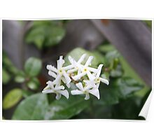Flower Blades Poster