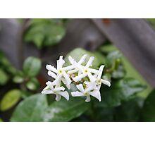 Flower Blades Photographic Print