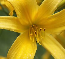 Pedestals of Pollen  by Okeesworld