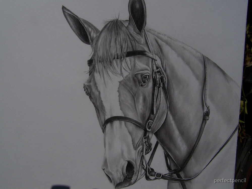 HORSE BUST WITH BRIDLE #2 pencil by perfectpencil