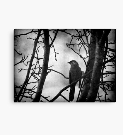 The Honeyeater Canvas Print