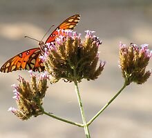Flutter-by by Doug Gruber