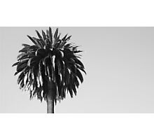 Soldout For The Shade Of The Palm Tree Photographic Print