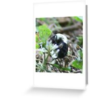 Beeing happy Greeting Card