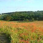 Vibrant Poppy Field by DarlingDarkling