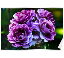 Purple Roses Poster