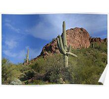 Saguaro Landscape Poster
