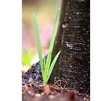Green Blade Photographic Print