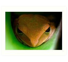 portrait of Mr. Frog Art Print