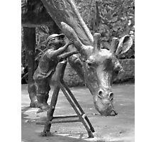 Dikkertje Dap and the Giraffe (close-up) Photographic Print