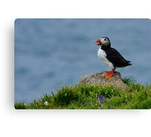 Rock Puffin Canvas Print