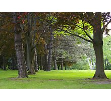 Woods of Victoria, Ontario, Canada Photographic Print