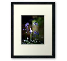 British Bluebells Framed Print