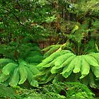 Tasmania Rainforest 2010-2011 by phillip wise