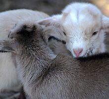 New Born Love by laureenr