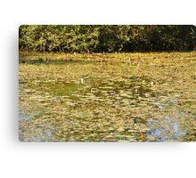 Beautiful Pond Canvas Print