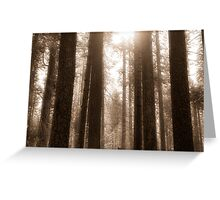 Sunlight in the forest Greeting Card