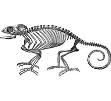 Chameleon Lizard Skeleton Photographic Print
