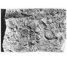 Brachiopod fossils from Usk, Monmouthshire Poster